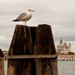 IMG 3367 150x150 Mit Manfrotto in Venedig   Das Resumee